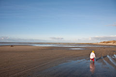 People looking for amber at the beach of the Island of Fanoe in Stock Photo