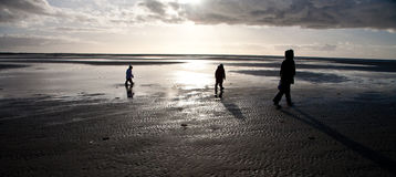 People looking for amber at the beach of the Island of Fanoe in Royalty Free Stock Images