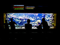 People looking at aquarium. Silhouettes of people looking at lit aquarium in the dark Royalty Free Stock Photography