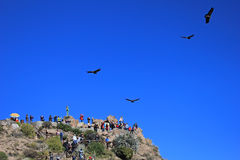 People looking at the condors Royalty Free Stock Photos