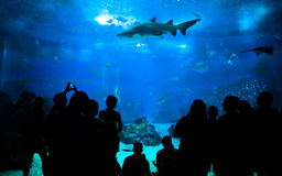 People looking marine life in an aquarium Royalty Free Stock Image