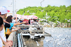 Bangpu, Thailand : People looking seagull. Stock Images