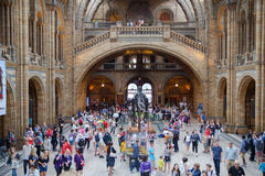 People in the National History Museum, London Royalty Free Stock Images