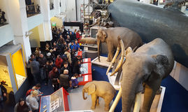 People at Natural History museum in London city, United Kingdom. Royalty Free Stock Images
