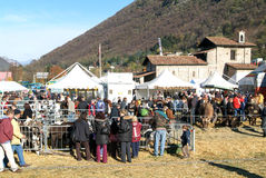 People observing the animals at the rural fair Royalty Free Stock Photography