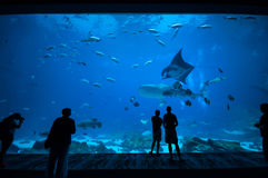 People observing fish at the aquarium 3 Stock Images