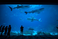 People observing fish at the aquarium 2 Royalty Free Stock Photos