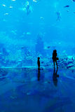 People observing fish at the aquarium Royalty Free Stock Images
