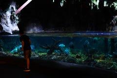 People in Ocean World aquarium in bangkok city. People inside Ocean World aquarium in bangkok city ,thailand ,9th february 2019 stock photo