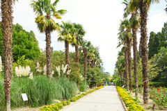 People on palm alley in nikitsky botanical garden Stock Photo