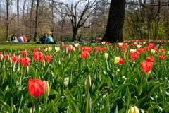 People in a park with tulips royalty free stock photography