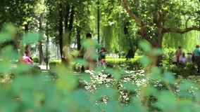 People in The Park. People walking relaxed in the park in a hot summer sunny day stock video