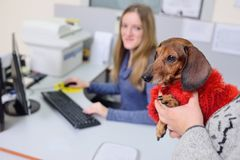 People with their pets are waiting for a medical examination at the veterinary clinic. Animal Health Royalty Free Stock Photography