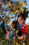 People picking grapes in Plovdiv Royalty Free Stock Photo