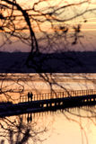 People on pier. Visible from behind tree stock image