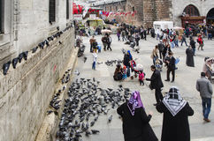 People and pigeons around the New Mosque courtyard Royalty Free Stock Image