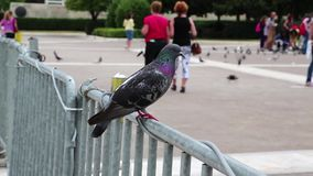 People and pigeons Royalty Free Stock Images