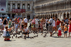 People with pigeons in San Marco Plaza. 16. Jul 2012 - People with pigeons in San Marco Plaza 3 in Venice, Italy stock images