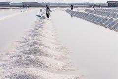 People Piling Up Sea Salt Royalty Free Stock Photos