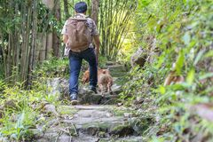 People with Pit Bull dogs on a hiking trail in nature. royalty free stock photo