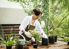 People is planting flowers. Concept Stock Photography