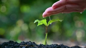 People are planting and watering plants in their hands. There are trees, ideas for preserving nature and the environment