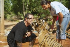 People play with indochinese baby tiger in Saiyok, Thailand. Royalty Free Stock Images
