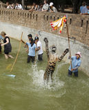 People play with tigers in a pond Stock Image