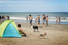 People playing in a beach. Mar del Plata, Argentina - February 12, 2013: A family playing Tejos, an argentinian game similar to quoits. A lot of people and dogs Stock Photography