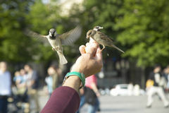 People playing with birds in the park next to Notre Dame Cathedral, Paris, France Royalty Free Stock Photo