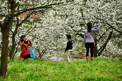 People playing in Blooming orchard Spring Stock Photos