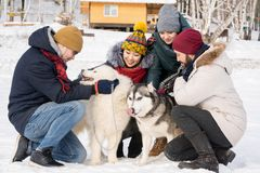 People Playing with Dogs on Vacation. Full length portrait of group of young people petting Husky dogs sitting up on sunny winter day outdoors Stock Images