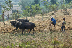 People plowing the dry lands with a couple of water buffaloes Royalty Free Stock Photo