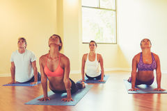 People Practicing Cobra Pose in Yoga Class Royalty Free Stock Photography