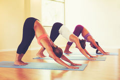 People Practicing Downward Dog Pose in Yoga Class Royalty Free Stock Photo