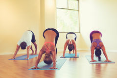People Practicing Downward Dog Pose in Yoga Class Royalty Free Stock Photography