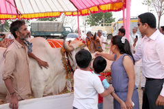 People in pradakshana around cows-Desi Cow mela Royalty Free Stock Photos