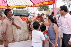 People in pradakshana around cows-Desi Cow mela Royalty Free Stock Photos