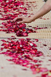 People prepare rose petals for the monks Royalty Free Stock Image