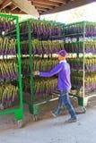 People processing lavender of the Tomita Farm in Hokkaido Royalty Free Stock Photo
