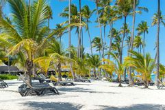People relax on the beach among palm trees royalty free stock image
