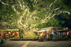 People relax under the big tree with light Royalty Free Stock Photos