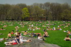 People relaxing in Central Park Royalty Free Stock Image