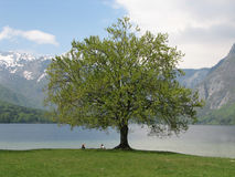People relaxing at Lake Bohinj Royalty Free Stock Photos