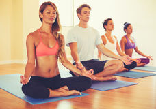 People Relaxing and Meditating in Yoga Class. Royalty Free Stock Photo