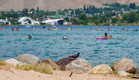 People relaxing during summer holiday in Kyrgyzstan. People swimming and relaxing during summer holiday near Cholpon-Ata, Kyrgyzstan 30. 07. 2017 royalty free stock images