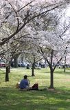 People relaxing under blossom trees. (Washington DC, USA Stock Photography