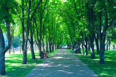 People rest in city park sitting on benches. Footpath with big trees and benches. Relax place. Chernihiv / Ukraine. 28 May 2018: People rest in city park sitting royalty free stock photography