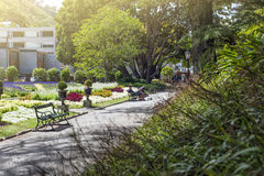 People resting at Wellington Botanic Garden, the largest public park in town Royalty Free Stock Images