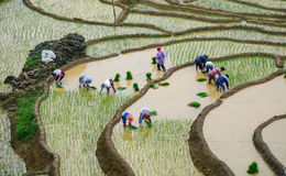 People on the rice field at Y Ty town in Sapa, Vietnam.  Stock Photos